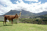 Picture 'Eq1_36_29 Highlands, Lama, Equador, Equador - Highlands'